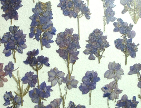 "LUXE ""A 72"" Violette Blomster"