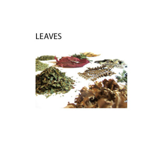 Organoid_Leaves_Fellesbilde